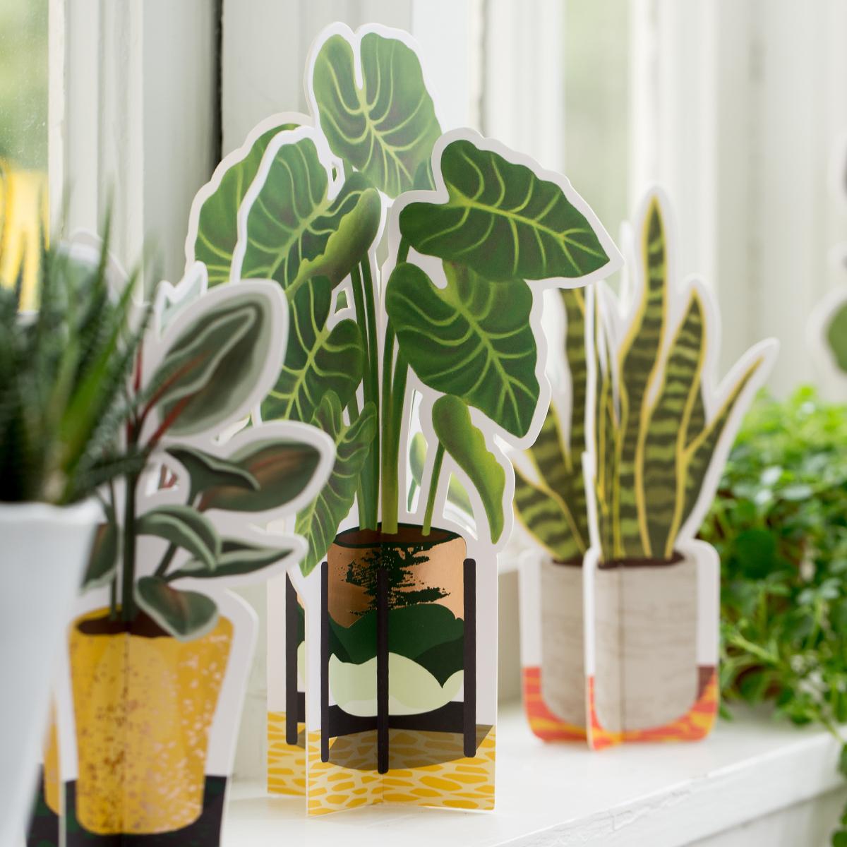 Elephant Ear Paper Plant Seltzer Goods