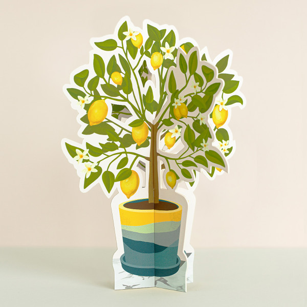 Lemon Tree Paper Plant 1
